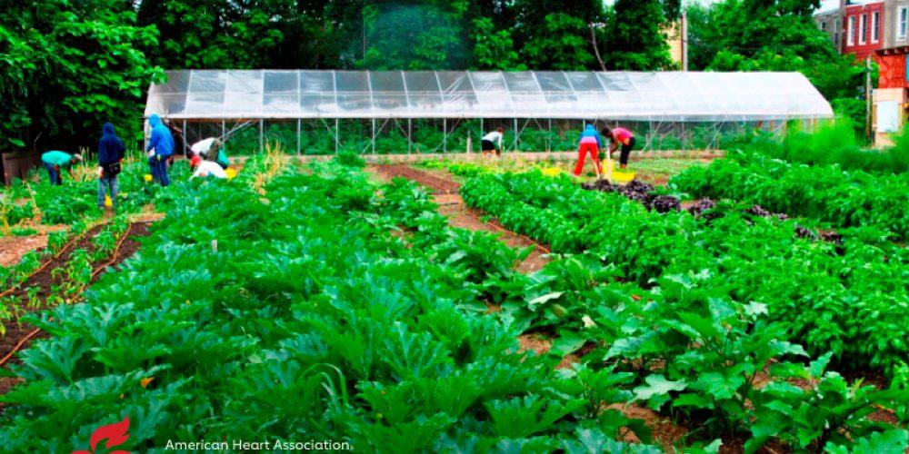 AHA News: Farms Flourish and Nourish in Philadelphia Neighborhood
