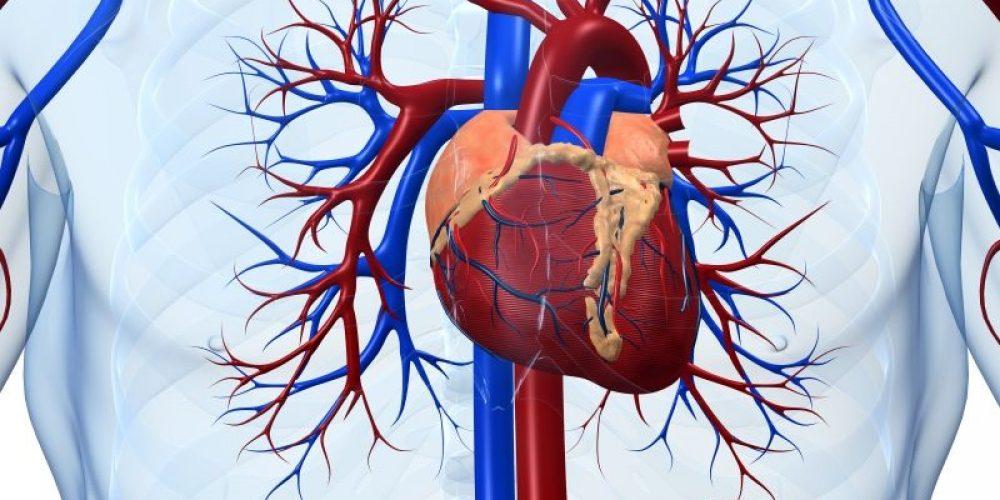 Healthier Heart, Better Brain in Old Age