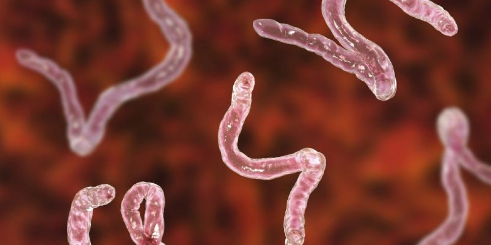 Icky Prescription: Could Hookworms Help Ease MS?