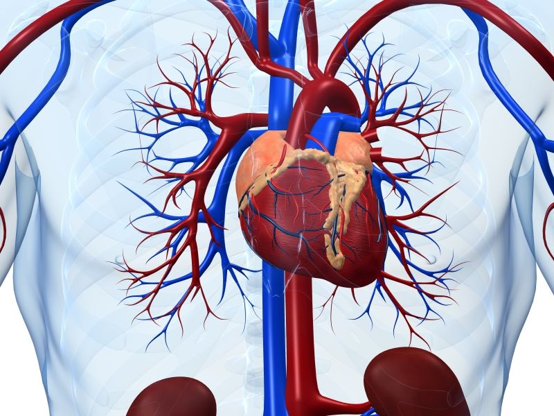 News Picture: Healthier Heart, Better Brain in Old Age
