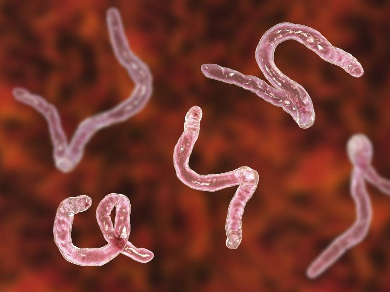News Picture: Icky Prescription: Could Hookworms Help Ease MS?