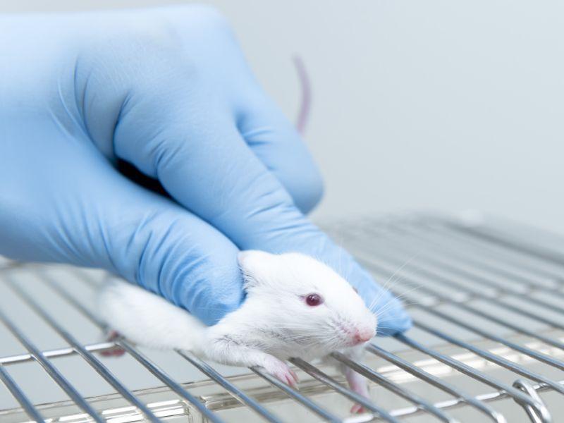 News Picture: Transplanted Skin Stem Cells Help Blind Mice See Light